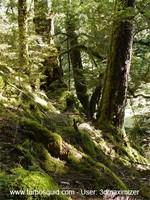 New Zealand landscape 008.jpg