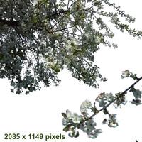 branch4.psd
