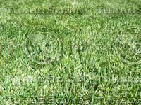 Grass High Quality