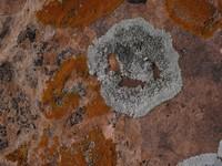 Rock Texture - Lichen 2