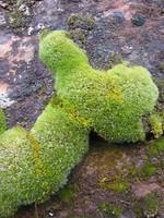 Rock Texture - Moss 1