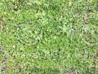 texture_grass2.jpg