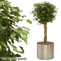 tree15.psd