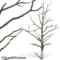 tree20.psd