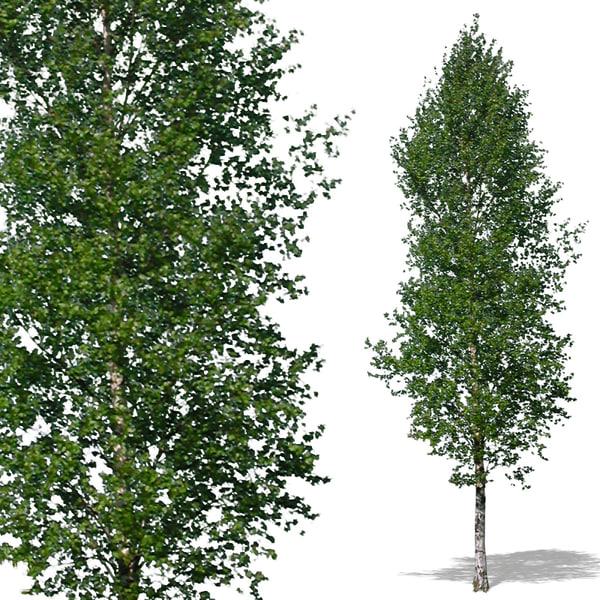tree24