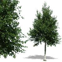 tree25