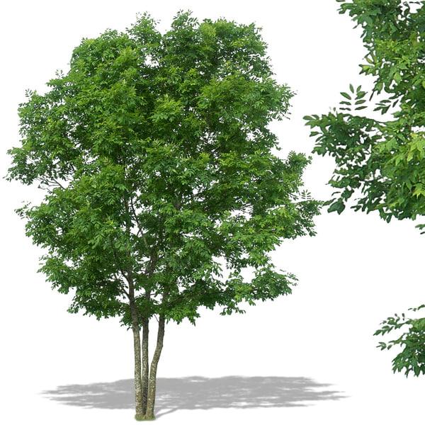 tree27p.jpg