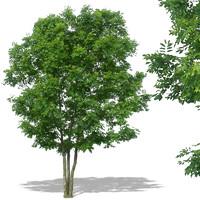 tree27