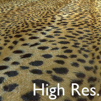 Leopard Texture High Resolution.JPG