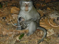 monkey with son