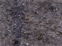 Dirt (High-Res, with bump maps)