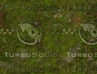 Green_moss.jpg