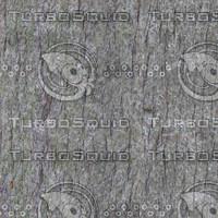Palmtree1.jpg