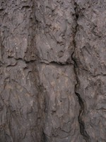 Rock Texture - Fluted 2