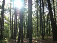 forestlight.jpg