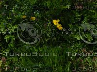 grass_2.jpg