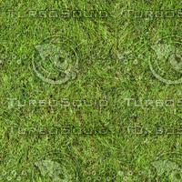 Grass Texture 1