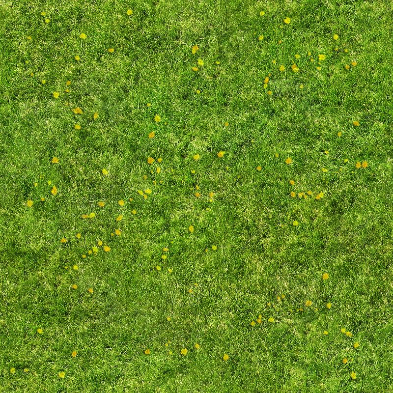 Texture Other Grass Texture Map