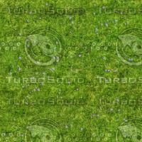 Grass Texture 8