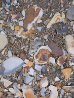 Rock Texture - Gravel 3