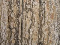 Rock Texture - Layered Rock 8