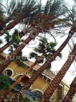 palmsvegas.jpg