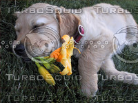 puppy with flower