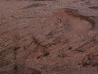 Rock Texture - Sandstone 7