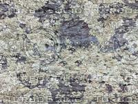 texture_fungus01_bySentidos.JPG