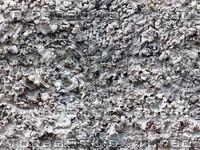texture_fungus02_bySentidos.JPG
