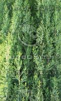 High Quality Organic Tree