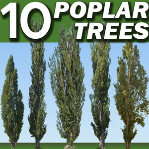 10 Poplar Trees Collection   ----------------------  High Resolution