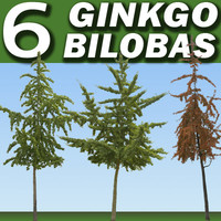 6 Ginkgo Bilobas Trees Collection ---------- High Resolution.psd