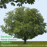 Horse chestnut 22m - High Resolution