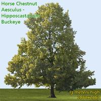 Horse chestnut 13m - High Resolution