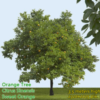 Orange Tree Texture High Resolution