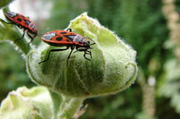 Firebug.jpg