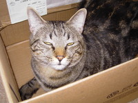 cat0326.JPG