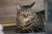 cat0619.JPG