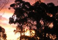 firetrees.jpg