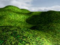 grass_6000px_2.jpg