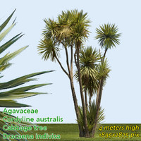 Cabbage Tree - High Resolution