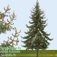 Pacific Silver Fir Texture - High Resolution