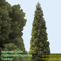 Japanese Cedar - High Resolution