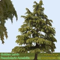 Golden Larch Tree Texture ------------------ High Resolution