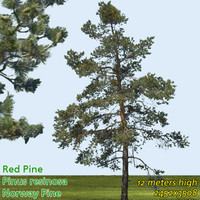 Red Pine Texture 12m - High Resolution