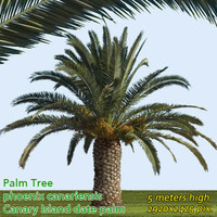 Canary Date Palm 5m - High Resolution