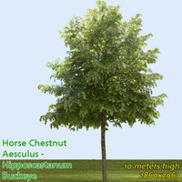 Horse chestnut 10m - High Resolution
