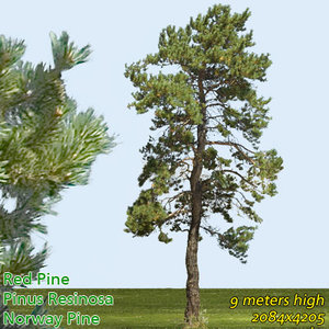 Red Pine Texture 9m - High Resolution