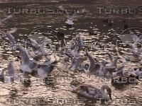 lake birds 2.JPG
